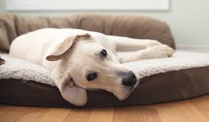 top 7 best orthopedic dog bed models in 2017 for all breeds and