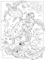 Fresh Hard Animal Coloring Pages Inspiring Design Ideas