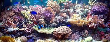 aquarium poisson prix aquarium eau de mer prix aquarium eau douce poisson vrac it