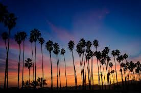 Tropical Beach Sunset With Silhoette Of High California Palm Trees In Santa Barbara