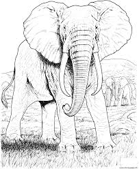 Elephant Hard Animal Adult Coloring Pages Print Download 137 Prints