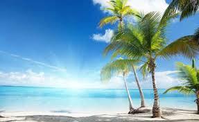 consalnet fototapete sonniger strand mit palme glatt strand