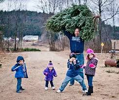 Christmas Tree Farm Near Lincoln Nh by Glove Hollow Cut Your Own Christmas Tree Central Nh