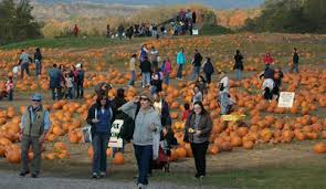Chatham Kent Pumpkin Patches by Food Shopping Rural Intelligence