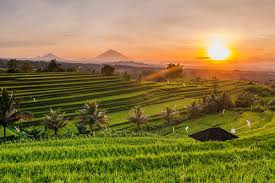 100 Ubud Hanging Garden Bali How About A Holiday In Catch A Glimpse Here IndonesiaTravel