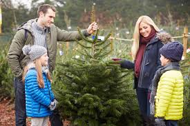 Which Christmas Tree Smells The Best Uk where can i buy a christmas tree in london 7 of the best online