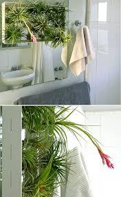 Plants In Bathrooms Ideas by 33 Best Bathroom Ideas Images On Pinterest Bathroom Ideas Room