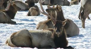 utah shuts down shed hunting until april in response to harsh winter