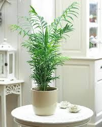cele mai bune 25 de idei despre entretien palmier pe