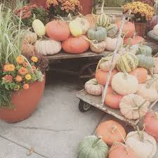 Best Pumpkin Patch Snohomish County by Tag Archive For