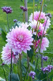 top 10 plants and bulbs for planting in bulbs