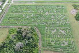 Pumpkin Patch Sacramento 2015 by Corn Mazes From Coast To Coast Sever U0027s Maze And More
