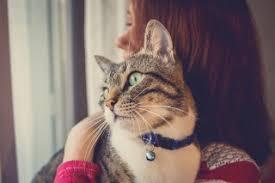 cat wont eat my cat won t eat causes symptoms treatment vets now