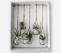 unkomplizierte zimmerpflanzen die schönsten pflanzen