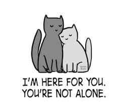 cat quotes 66 images about cat quotes on we it see more about cat