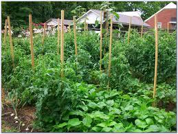 Craigslist Houston Tx Farm Garden Best Idea Garden