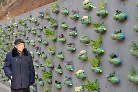 Hypster China XHNews Community Residents Make On Wall Vegetable Gardens Using Waste Plastic Bottles In ChangshaC Pictwitter KO42F27hTg