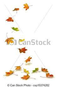 Drawn maple leaf falling leaf 8