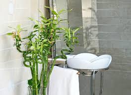 Best Bathroom Pot Plants by Bathroom Plants 10 All Time Favorites Bob Vila