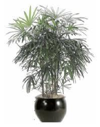 Trendy Design fice Plants No Light Brilliant 1000 Ideas About