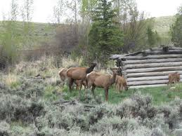 Ergle Christmas Tree Farm by Homestead Draw Ranch Wy Ranch For Sale