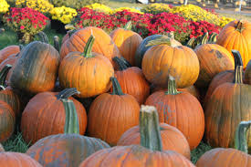Pumpkin Farm Illinois Best by 7 Of The Best Pumpkin Patches In Kansas Traveling Mom