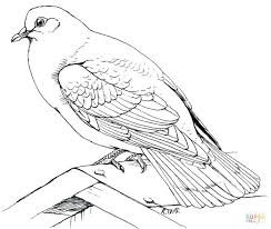 Dove Cameron Coloring Pages S Preschool To Fancy Doves Free For Kids