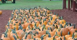 Atlanta Pumpkin Patch Corn Maze by Pumpkin Patches And Corn Mazes In Georgia Atlanta With Kids
