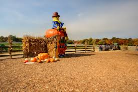 Pumpkin Patch Maryland by Fall Décor U0026 Pumpkins Nj Farms View Farm