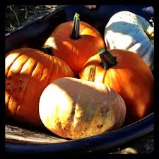 Pumpkin Patch In Homer Glen Illinois by Top 5 Pumpkin Patches U0026 Corn Mazes In The Usa Trover Blog