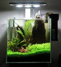 1Ft Cube Tank Aquascaping Aquascaping Aquarium Ideas From Aquatics Live 2012 Part 2 Youtube How To Make Trees In Planted Aquarium The Nature Style Planted Tank Awards Ultimate Shop In Raipur Fuckyeahaquascaping My 90p Tank One Month See Day 1 Here Best 25 Ideas On Pinterest Home Design Designs Aquascape Happy Journey By Adil Chaouki 1ft Cube Aquascaping Fuck Yeah Anyone Do For Your Fish Srt Hellcat Forum Archives Javidecor