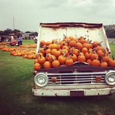 Pumpkin Patch North Austin Tx by 11 Corn Mazes And Pumpkin Patches To Visit In And Around San