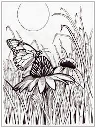 Full Size Of Animalwholesale Coloring Books Adult Girls Butterfly Sheets To Colour