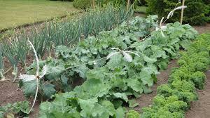 Versatile Ve ables for Fall Gardening