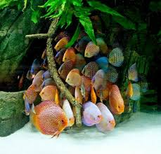 Beautiful Fish But They Look Terrified | Fish Tank | Pinterest ... Images Tagged With Aquascape On Instagram Aquatic Eden Aquascaping Aquarium Blog Aquascape Pinterest How Much Does It Cost To Run A Fish Tank Tropical Site 20 Of The Most Beautiful Places On Planet This Is Why You Can Natural Httpwwwokeanosgrombgwpcoentuploads2012 Takashi Amano Creator Of The Nature Love Aquascapenl Twitter Hardscape Axolotl Fish And Aquariums Planted Red Green By Adrian Nicolae Design