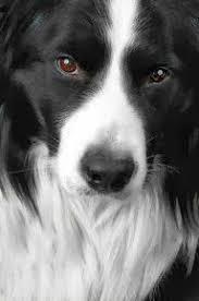 29 best Puppy Ideas images on Pinterest