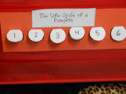 Life Cycle Of A Pumpkin Seed Worksheet by For The Love Of First Grade The Great Pumpkin Investigation
