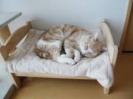 Cat Owners In Japan Turn IKEA Doll Beds Into Adorable Cat Beds