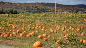 Pumpkin Patch Near Vancouver Washington by Roba Family Farms In Waverly Pa Parent Reviews U0026 Photos Trekaroo