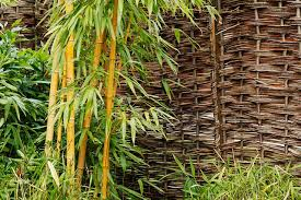 entretien des bambous en pot bambou en pot ou jardinière quelle variété comment l entretenir