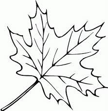 Drawn maple leaf fall leaves 1