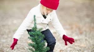 Christmas Tree Pickup Baltimore County by Home Cool Progeny