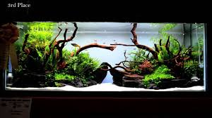2015 Aquatic Experience Aquascaping Competition - YouTube Aquascaping Artist Oliver Knott Scapingaquarium Pinterest Schwimmende Stein Steine Im Aquarium By Knott Youtube Aquascapi Sequa Interzoo 2012 Feat Chris Lukhaup Live Part 3 The Island Aquascape Step Aquariology With At The Koelle Zoo Heidelberg New Project Photo Editor Online And Editor Made Teil 1 Inspiration Tips Tricks Love Aquascaping Octopus Aquarium Via Aquac1ubnet