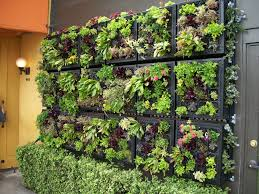 Edible Wall Garden By Tournesol Siteworks Cool Vertical Outside Pizzeria Mozza In Los Angeles City