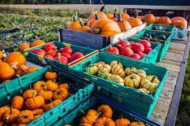 Varieties Of Pumpkins Uk by Kent Pumpkins And Squashes The Hop Shop