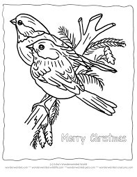 Printable Christmas Coloring Pages Birds Echos Winter To Color