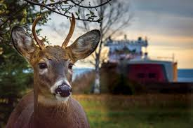 When Do Deer Shed Their Antlers Ontario by Oh Deer The Buck Truth About Our Local Cervids Lake