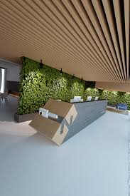 live green wall and wooden slats in the ceiling office