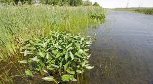 fleur et plante du lac végétation la vie sous l eau eaux de vies