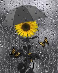Yellow Grey Bathroom Ideas by Yellow Gray Wall Art Sunflower Butterflies Bathroom Bedroom Home
